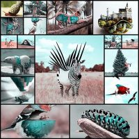 Photoshopped Animals (17 pics)