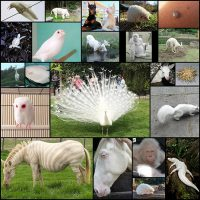 23-Albino-Animals-That-Look-Like-They're-From-Another-Planet1